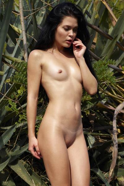 Model Belle in Tropical
